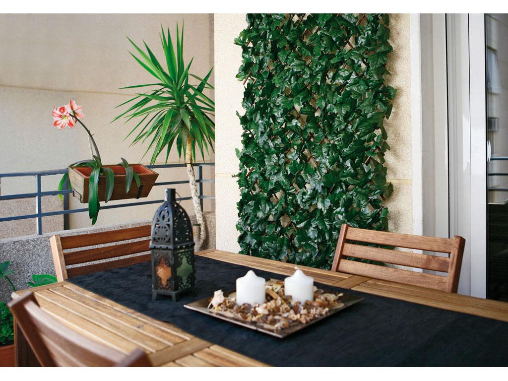 Celos a extensible con hojas chevroni garden for Celosias para jardin