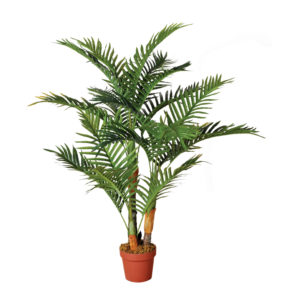 palmera1